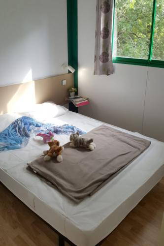 ostrea chambre